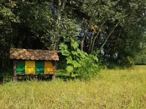 Tretje mesto na mednarosnem UNESCO foto natečaju »S ČEBELO – ZA ČEBELO«